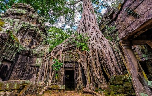 Le temple Ta Prohm